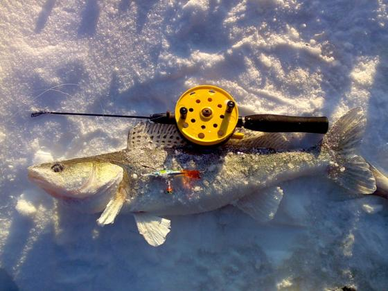 Kuhan kalastus joessa on nyt pop!