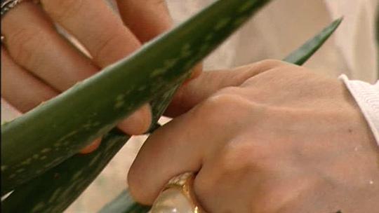 Aloe vera -hyytelöä saa joko itse kasvista tai luontaistuotekaupasta.