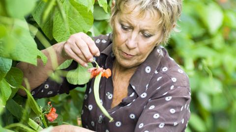 Puutarhan lumoissa: Viljalti vihanneksia. Carol Klein. Kuva: YLE Kuvapalvelu