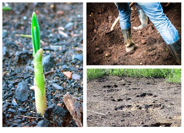 Tunnista puutarhan maaperä. Kuva, stock.xchng, Jason Anthony & Spencer Britton.