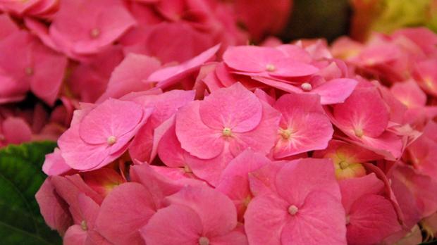 Nyt ostetaan kukkia äidille! Kuva: Yle Olotila, Anni Alatalo.