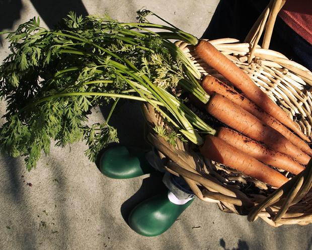 Kausiruokaa sesongeittain. Porkkanaa, kuva Yle/Pixtal.