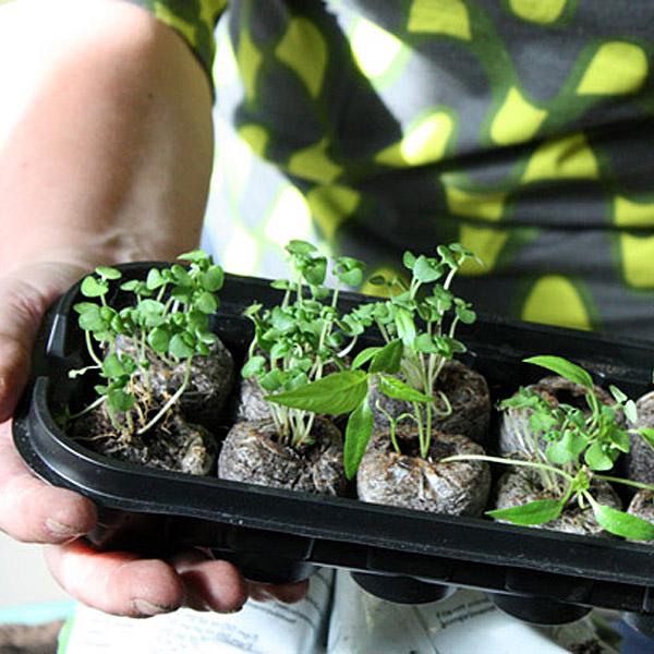 Puutarhan vuosi: taimet poteissaan. Kuva: Yle Puhe, Salla Vuolteenaho