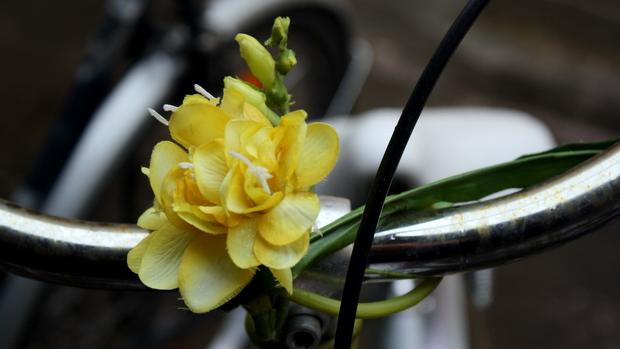 Kevättä pyörään kukilla. Kuva: Liisa Koivisto