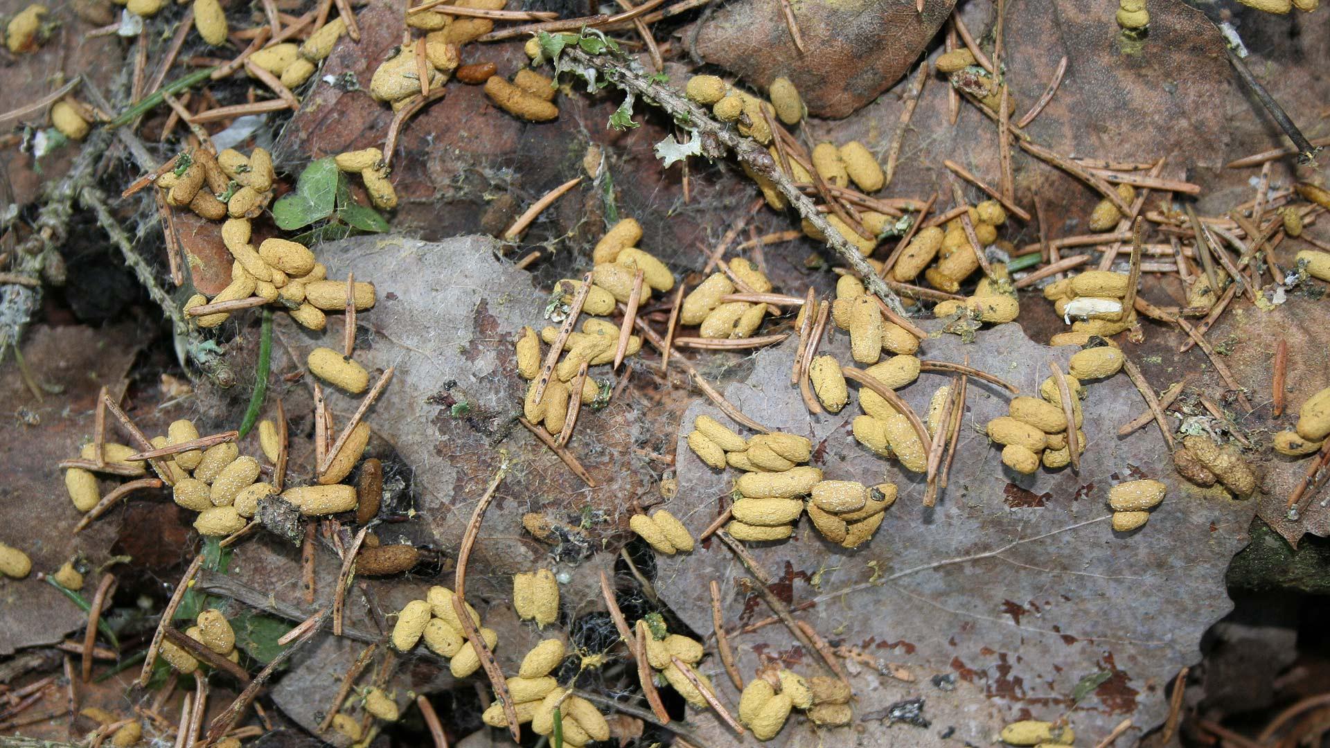 Liito-Oravan Papanat