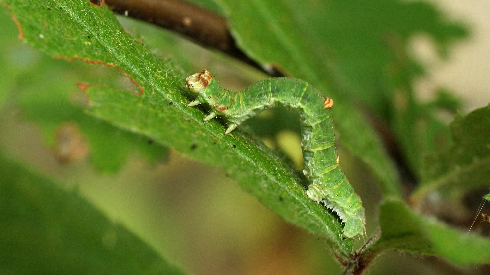 Perhosen Toukat Kuvina